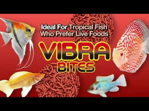 NOW AVAILABLE! – Color You Have To See To Believe! – Vibra~Bites from Hikari®