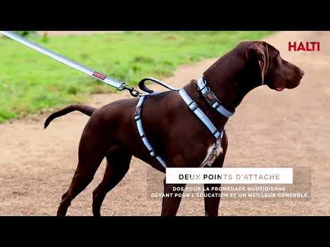 HALTI Walking Harness - French Subtitles