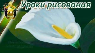 Как научится рисовать красивые цветы. Каллы.(Давайте нарисуем красивые цветы. В этом видео уроке посмотрим как создаются красивые рисунки в реальном..., 2014-06-09T09:27:39.000Z)