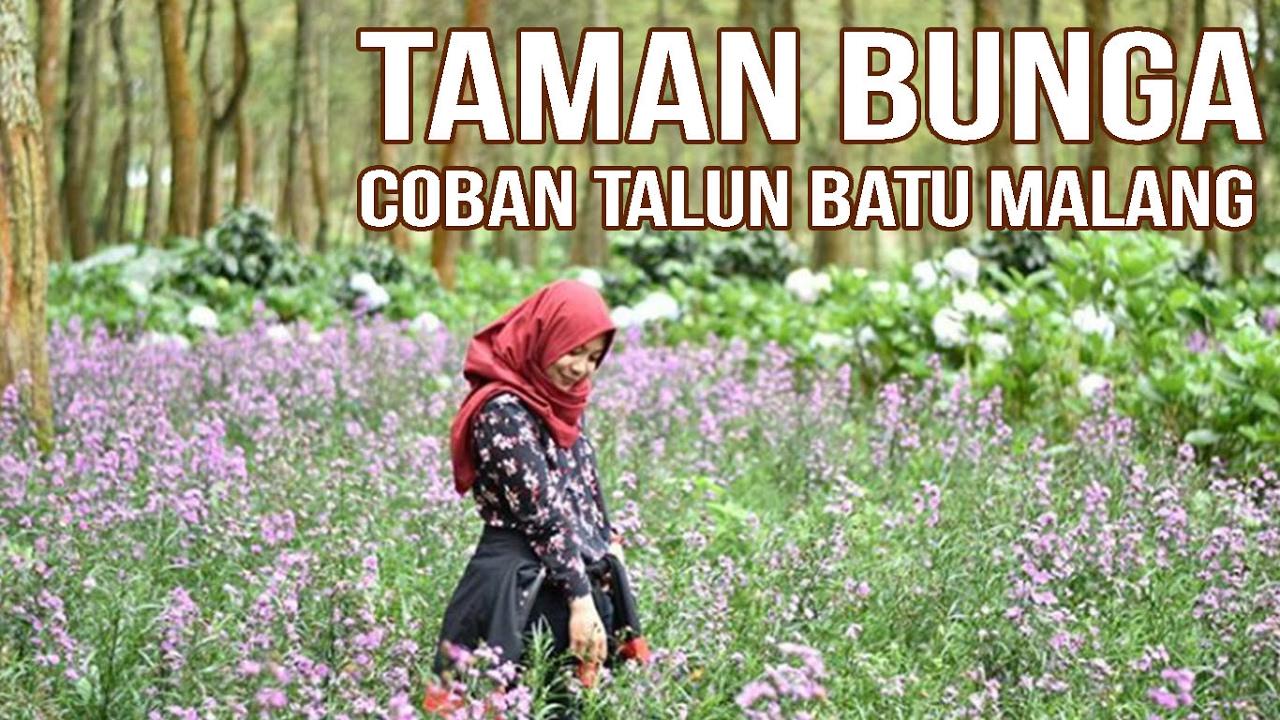 Taman Bunga Di Coban Talun Batu Malang Youtube Vas