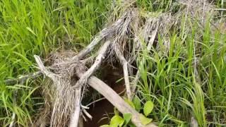 Байки из леса. 25.06.17 речка Каменка Тумановское ПО
