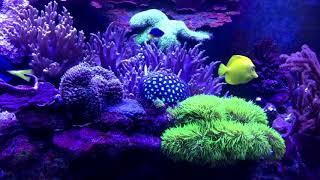 аквариум морской рыбки aquarium fish