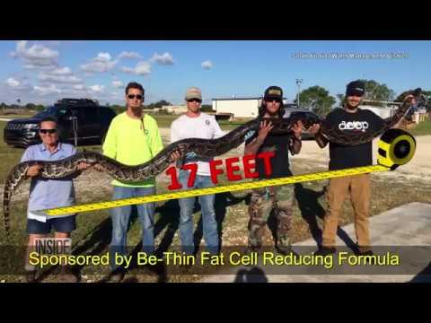 Florida Man Finds 17-Foot Python!
