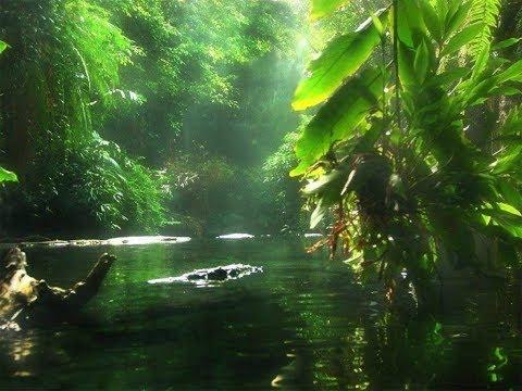 Интересные факты  Джунгли  Дикая природа и животные Южной Азии  Лучший фильм о природе - Смотреть видео без ограничений