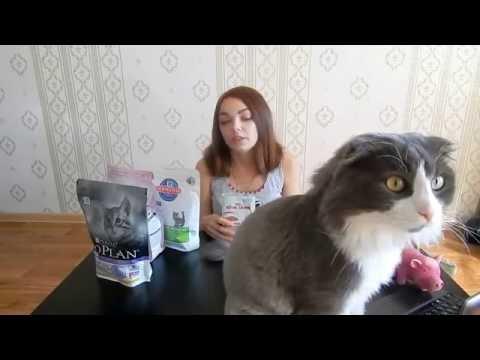 Вопрос: Каким кормом вы кормите своих кошек?