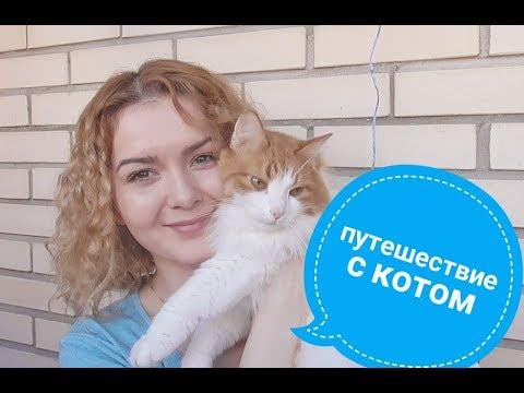 Как перевезти кошку в поезде по россии
