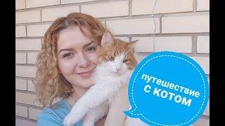 Как перевезти кота в поезде 2018 / Переезд с котом.