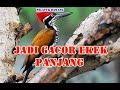 Masteran Burung Caladi  Mp3 - Mp4 Download
