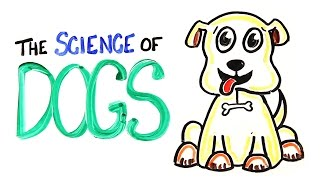 Download The Science of DOGS Mp3 and Videos