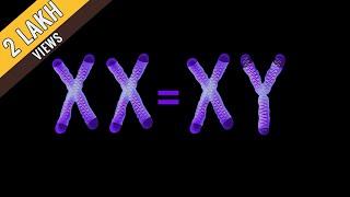 XX = XY | Award Winning 2-Min Short Film (English Subtitles) | Argus Troezianz 2k15