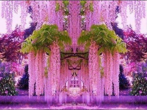 Park of flowers in Japan Ashikaga  . Парк цветов в Японии Асикага