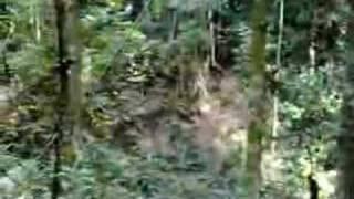 command conquer   part 1   malaysia jungle   video05