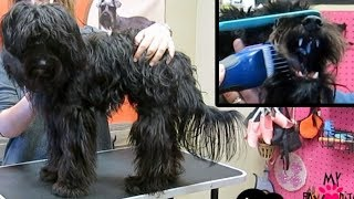 Dog Matted Grooming Does  T Hurt Your Dog