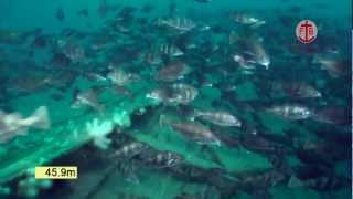Underwater video of the wreck of the hospital ship Warilda, torpedoed in the English Channel.