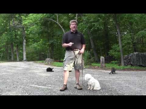 aria---board-and-dog-training---winston-salem-nc