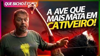 AVESTRUZ, A AVE QUE MAIS MATA TRATADORES EM CATIVEIRO!   RICHARD RASMUSSEN