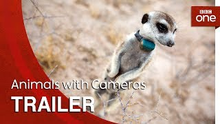 Animals with Cameras: Trailer - BBC One