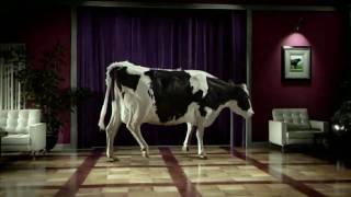 Tap Dancing Cow