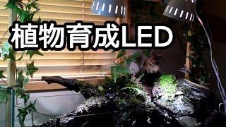 植物育成LEDライト「SPLamp-5w」開封、設置、自作ライトスタンドを改良...