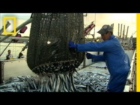 How More Efficient Fishing Can Protect The Ocean | National Geographic