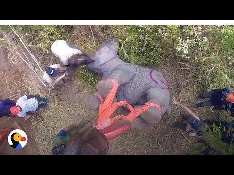 Elephants Airlifted 300 Miles To Keep Them Safe From People | The Dodo