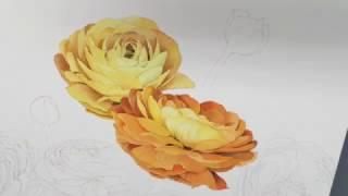 "Progress of watercolor ""Ranunculus"", part 2. How to draw flowers. Как рисовать цветы"
