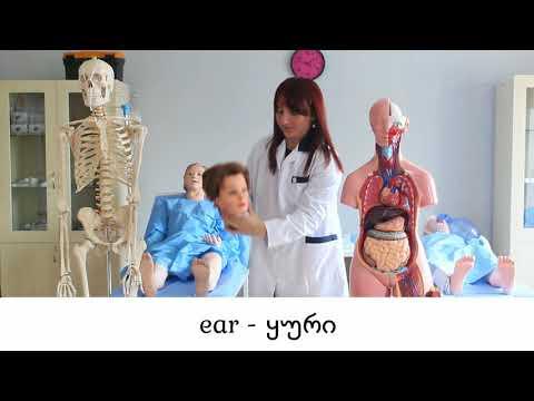 Internal and External Organs