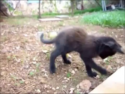 a1d7269bc494 Ομορφα παιχνιδιαρικα γατακια - YouTube