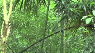 US Hi HNL Manoa Water Falls 20110729 DongD