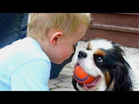 Baby and Cavalier King Charles Spaniel Compilation