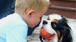 Baby and Cavalier King Charles Spaniel Compialtion