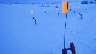 Жерицы 2021 стреляют одна за одной Ловля ЩУКИ на жерлицы в марте Утренний жор щуки Зимняя рыбалка