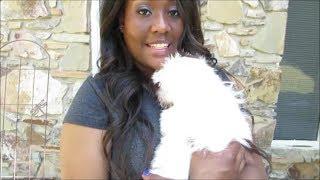 Vlog #354 Meet My New Maltese Puppy, Bentley! April 12, 2014
