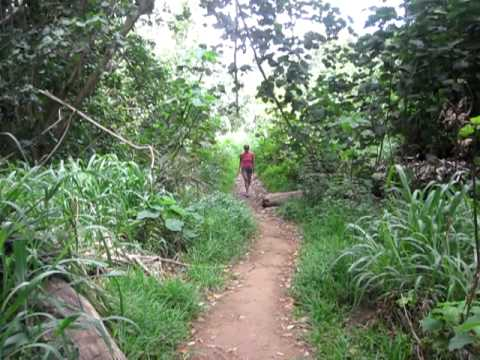 Still Hiking to Kauai's Secret Falls, April 30, 2012 (It's a Long Hike)