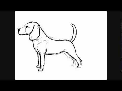 Dessin De Chien Beagle Comment Dessiner