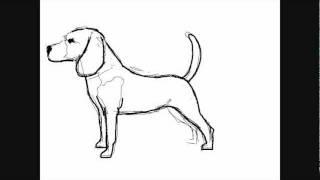comment dessiner un chien facilement