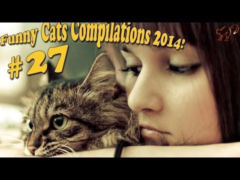 Смотреть Видео про кошек. Кошки приколы. Забавные кошки