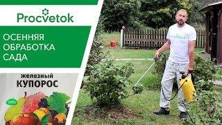 видео Железный купорос для обработки деревьев осенью