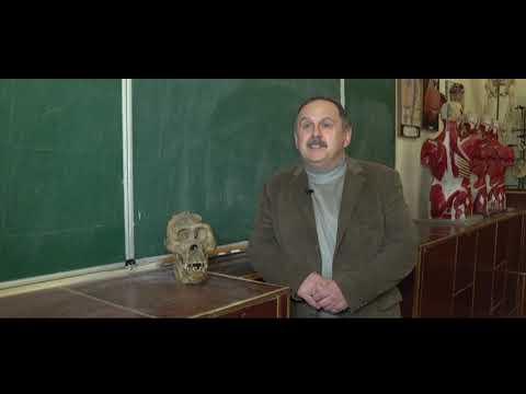 Телеканал UA: Житомир: Міфи та цікаві факти про неандертальців_Ранок на каналі UA: ЖИТОМИР 23.01.19