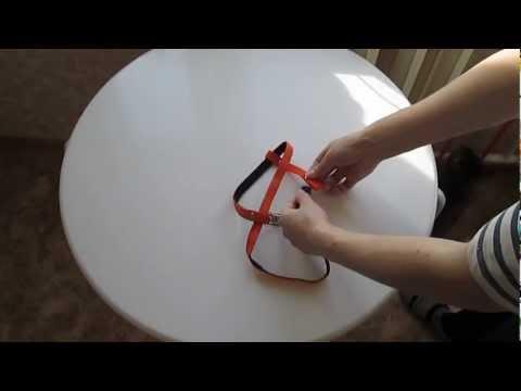 Как одеть шлейку на кота пошаговая инструкция в картинках