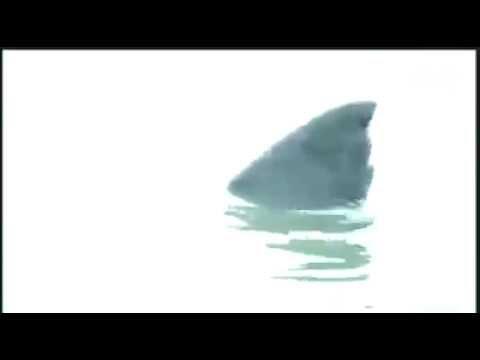Cá mập lên bờ, hồn vía vãi hết ra ngoài