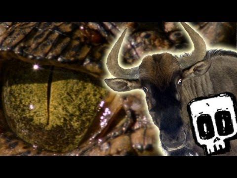 Nile Crocodile Vs Wildebeest Deadliest Showdowns Earth