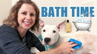 How To Give A Rescue Dog A Bath: Setting Yourself Up For Success