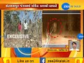 Now, tiger spotted in Santrampur forest - Zee 24 Kalak