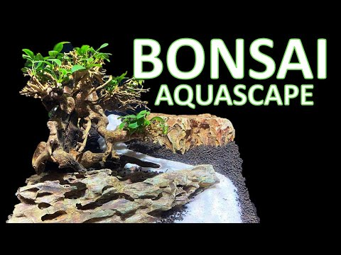 anubias-bonsai-aquascape-in-the-innovative-marine-encore-20