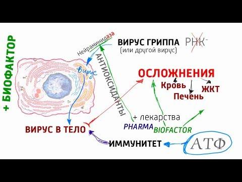 Биохимия вируса. Как работает вирус и как обезопасить себя? Алименко А.Н. (06.02.2019)