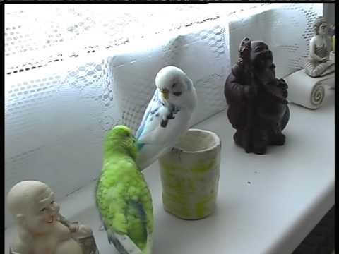 Betty&Meili cuteness!!! Vogel Spricht -ein Supertalent-