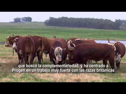Razas Hereford & Braford - Brasil Colombia TvAgro por Juan Gonzalo Angel