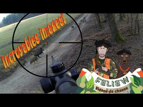 Exceptionnel: des images inédites de chasse au sanglier en battue, tir avec la Sauer 404!