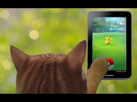 Cat nuts about POKEMON GO / Gato doido por POKEMON GO